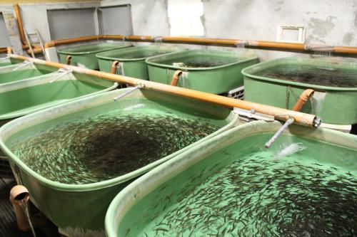 Fischzucht Spezial
